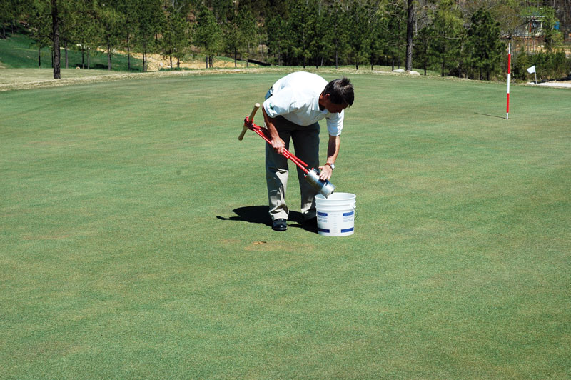 Golf course turf sample