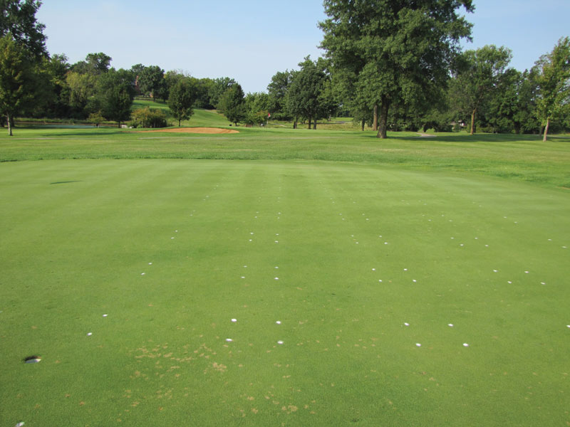 Effect Of Oriental Mustard Seed Meal For Dollar Spot Control Gcmonline Com