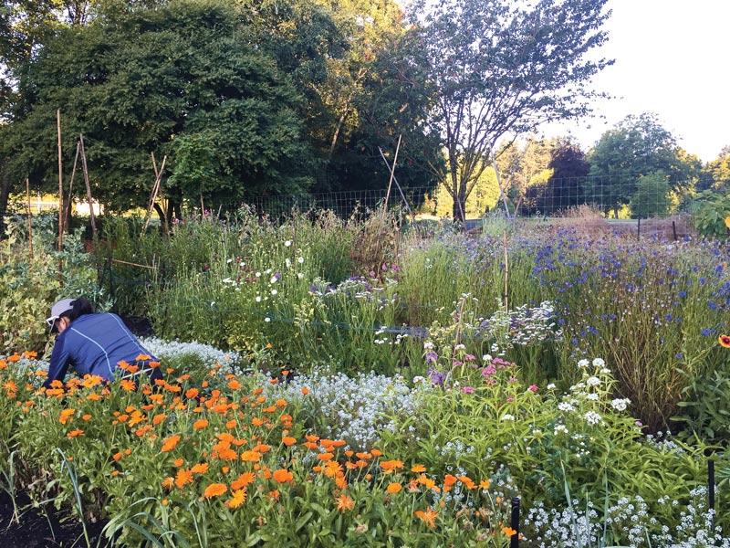 Cordova Bay garden