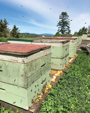 Golf course beehives