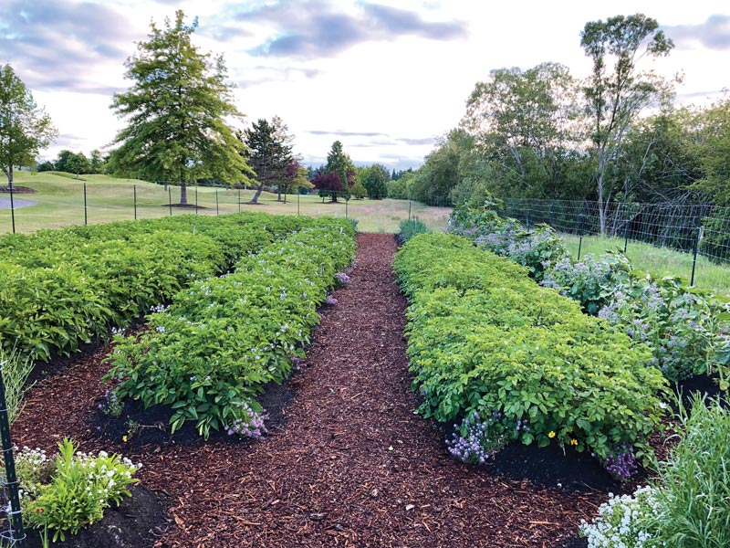 Potato patch golf course