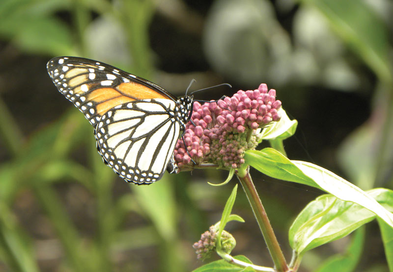 Monarch monitoring golf courses