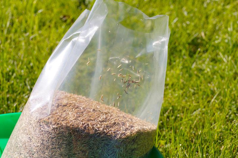 Turfgrass seed shortage