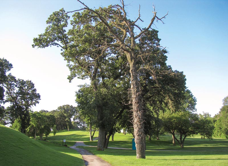 Cart path tree