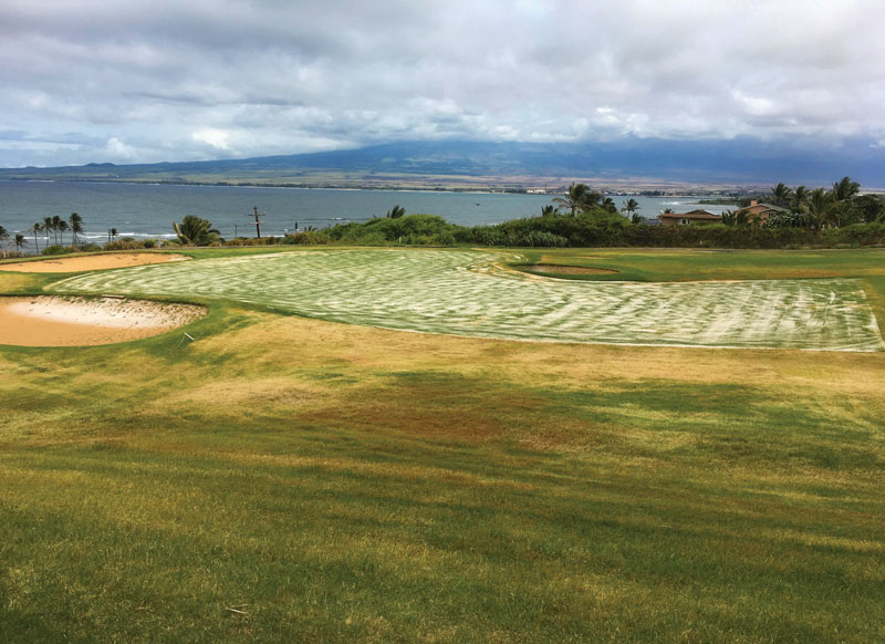Golf course renovation
