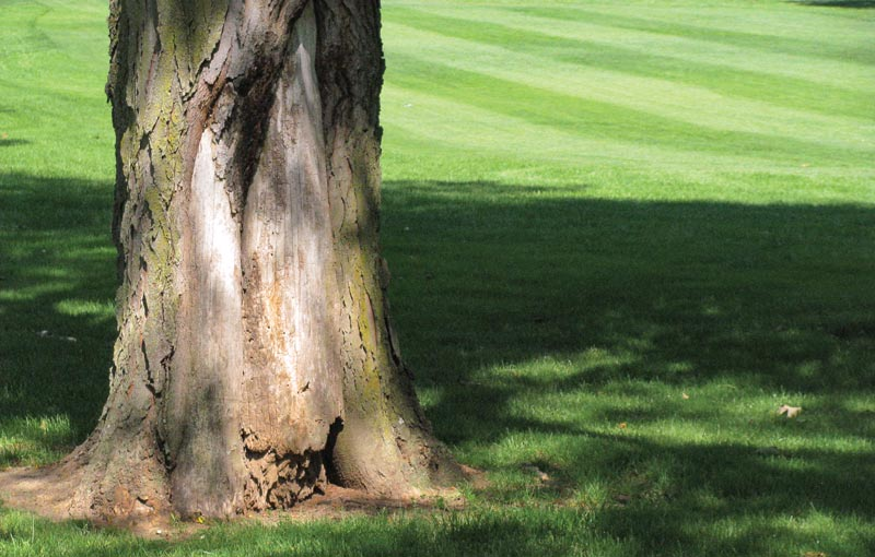 Golf course tree removal
