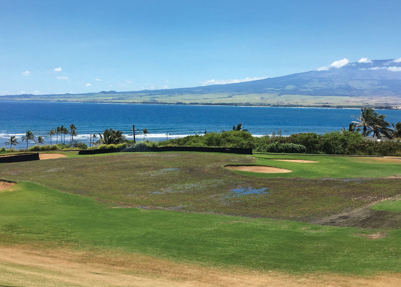 Waiehu golf