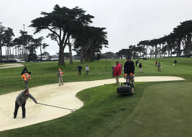 TPC Harding Park golf course maintenance