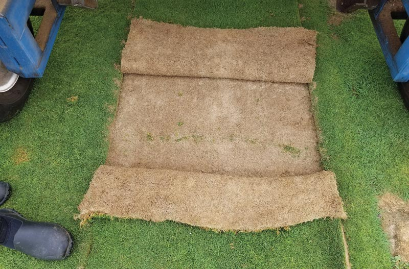 Putting green sod