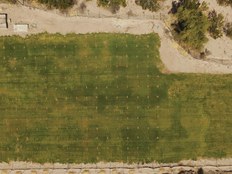 Bermudagrass drought research