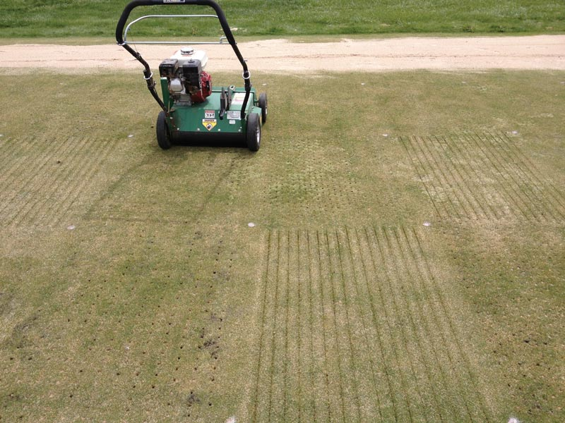 Creeping bentgrass aerification