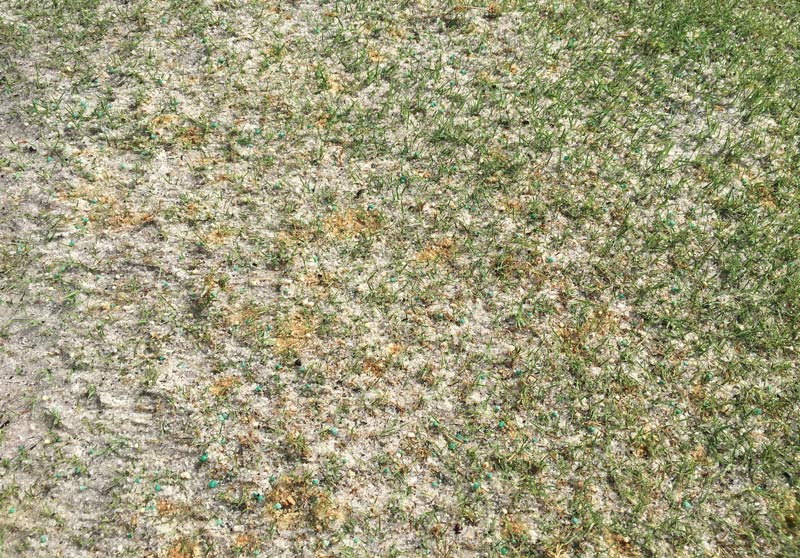 Iron sulfate turfgrass