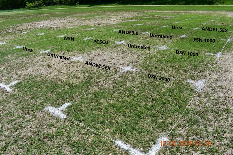 Bermudagrass fall nitrogen