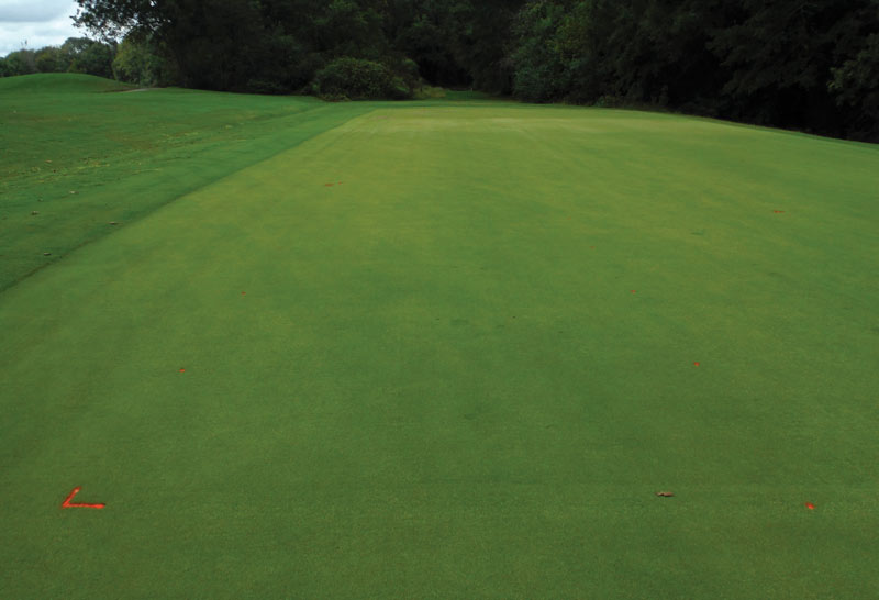 Diamond zoysia green