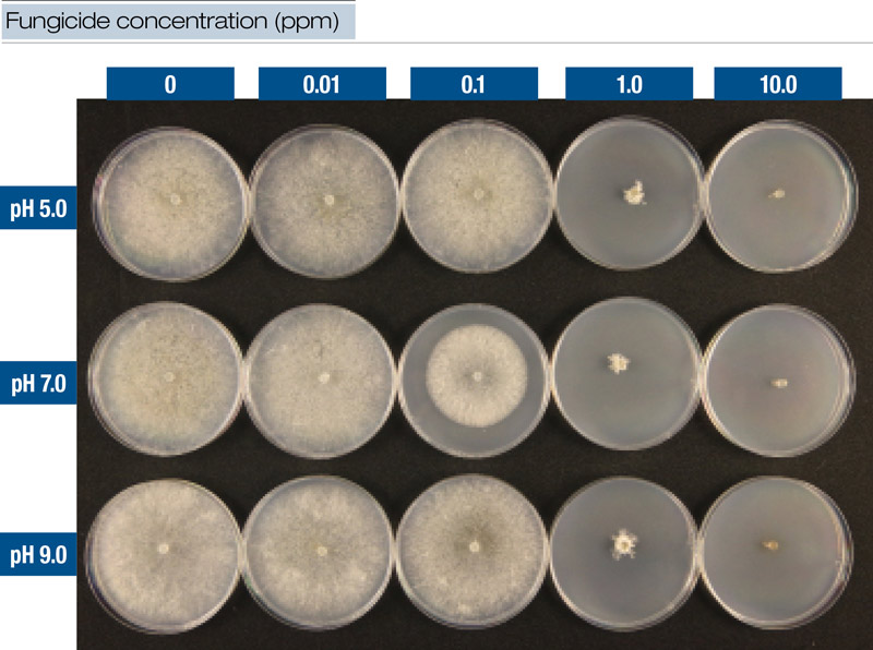 Fungicide concentration