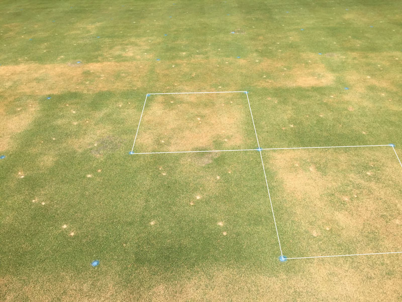 Ultradwarf bermudagrass spring green-up