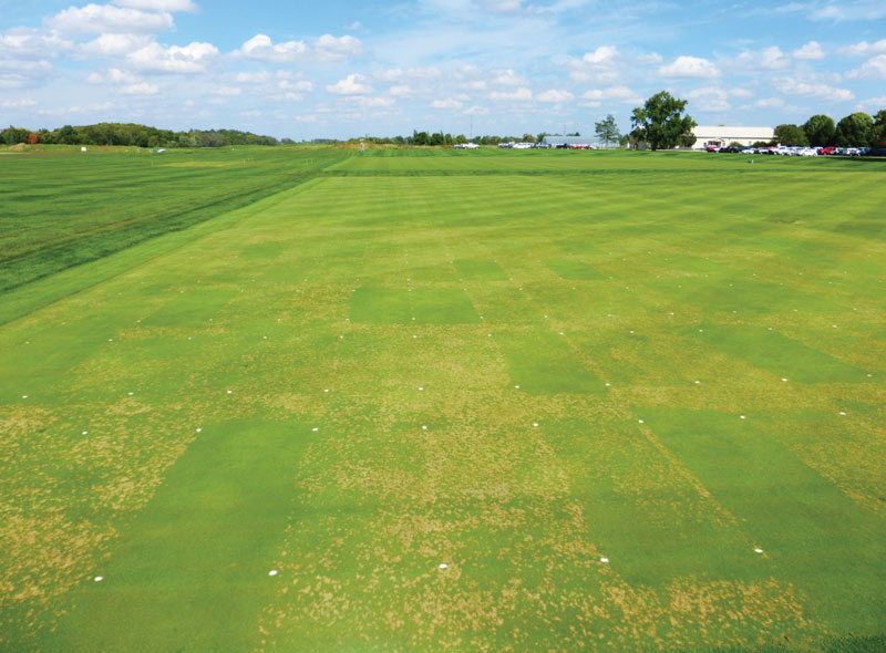 Water affects fungicides