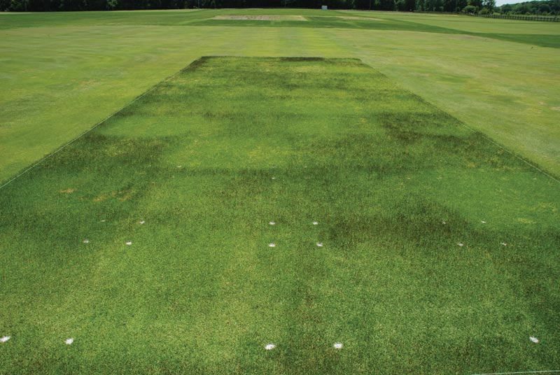 Zoysiagrass seedhead suppression