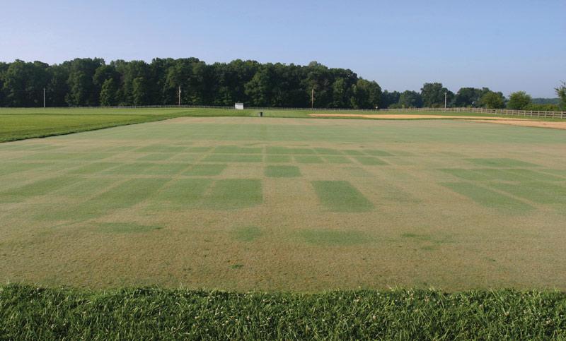 Combination fungicides turf