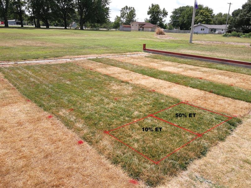 Turfgrass drought survival