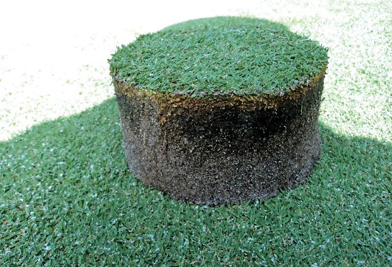 Black layer turf