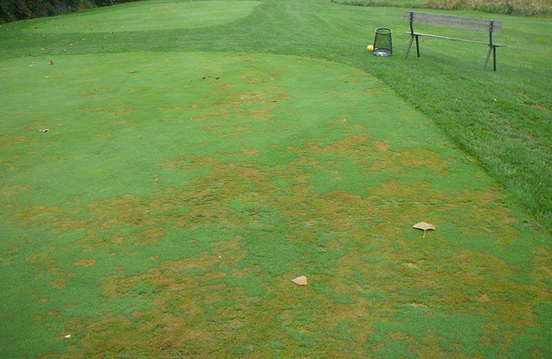 Pythium golf course