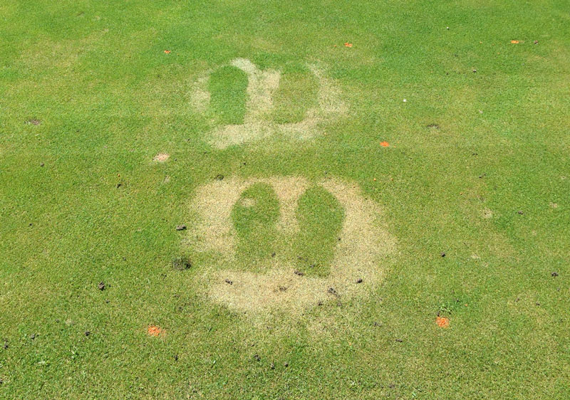 DEET turfgrass damage
