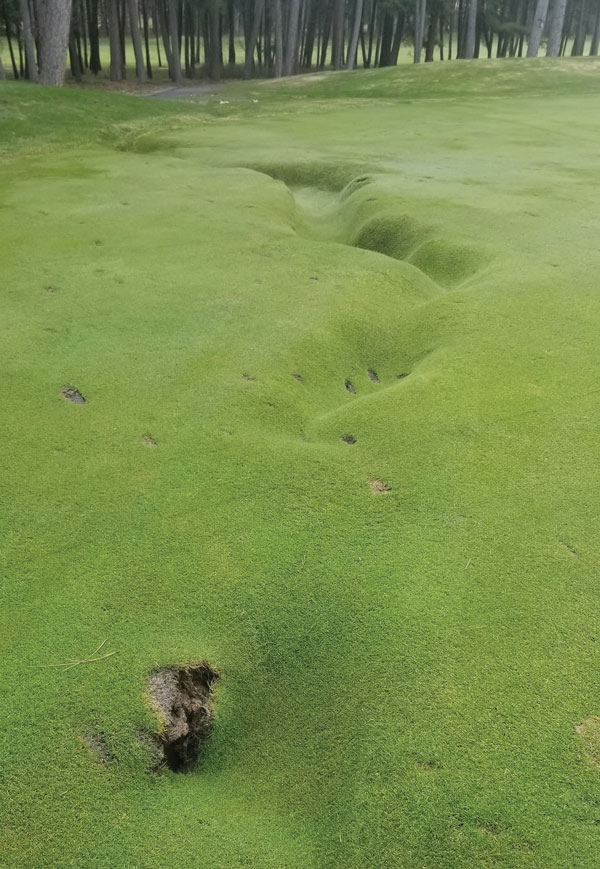 Uneven fairway turf
