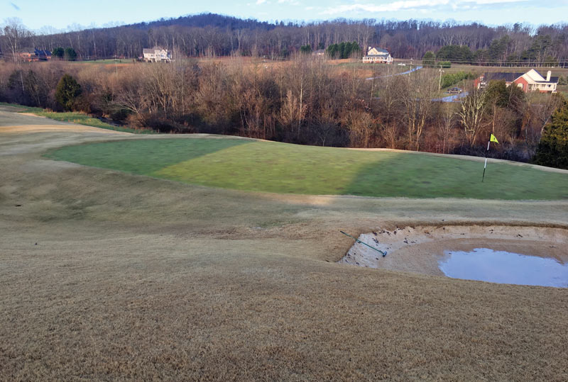 Yellow creeping bentgrass