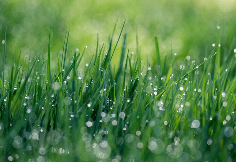Water functions in turfgrass